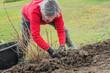 Leinwandbild Motiv Pflanzarbeiten im eigenen Garten