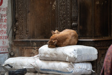 Stray Dog In Old Delhi Takes A...