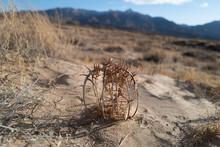 Strange Desert Plants In The Kelso Sand Dunes In The Mojave Desert, California