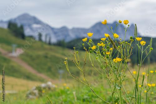 Photo  Wildblumen, unscharfe Berglandschaft Hintergrund