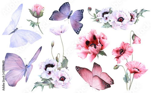 A picturesque set of butterflies, poppy flowers, buds and poppies arrangements hand drawn in watercolor isolated on a white background. Botanical illustration. Floral watercolor elements - 311159649