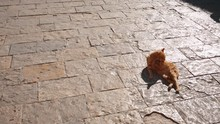 Red Cat Enjoys The Sun