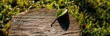 Fallen Leaf Lies On An Old Stu...
