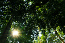 ๊ืInside Of The Forest Cov...
