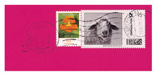Briefmarken Stamps Deuschland Germany Gestempelt Used Schaf Sheep Blume Flower Tier 2019 Pink Orange Kapuzinerkresse 80