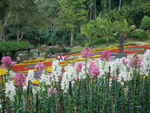 Flower Garden At Doi Tung, Chiang Rai, Thailand