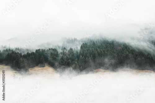 Fototapeta Moody forest landscape with fog and mist obraz