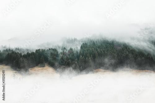 nastrojowy-las-krajobraz-z-mgla-i-mgla