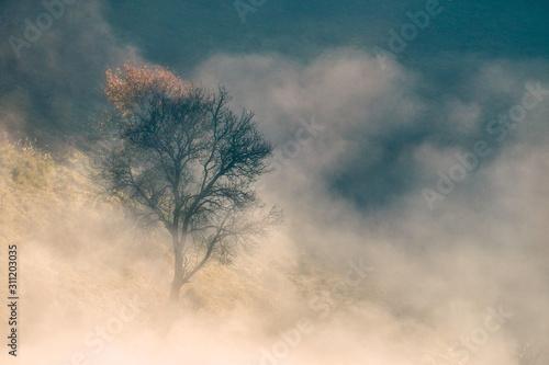 Drzewo jesienią w góracbh