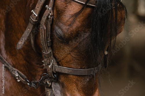 Cuadros en Lienzo  cara caballo 2