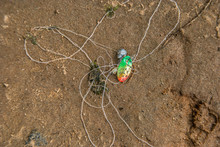 Fishing Lure Discarded