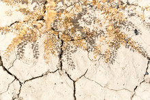Dry Cracked Desert Mud And A Dying Plant