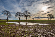 Bare Trees In A Waterlogged Field In Sussex, On A Sunny Winters Day