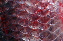 Scales Fish Texture Background...