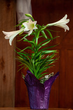 A Bouquet Of Easter Lily Sit During The Church Service On Display For All The See. Photo Taken In A Portrait, Vertical Orientation.