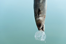 Fish Eating Plastic Bag With B...