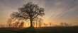 canvas print picture - bare tree with sun rays, tree funeral, forest cemetery
