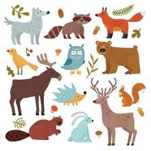 Forest Animals. Wolf, Raccoon ...