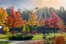 Autumn Park With Ornamental Trees And Bushes In Backlight