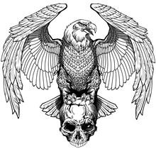 Eagle Sitting On The Human Sku...