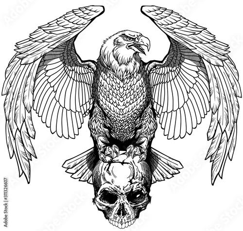 Fotografia, Obraz Eagle sitting on the human skull