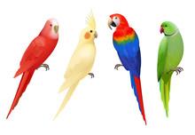 Parrots. Tropical Colorful Exotic Birds Macaws Nature Animals Vector Realistic Parrots Collection. Realistic Bird Parrot, Colorful Animal Fauna Illustration