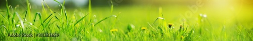 Obraz Fresh green grass background in sunny summer day - fototapety do salonu
