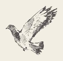 Beautiful Flying Dove. Hand Drawn Vector Sketc