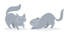 Cute Grey And White Cats In Different Position. Funny Kitten Play