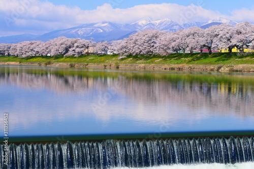 白石川一目千本桜と残雪の蔵王連峰。大河原、宮城、日本。4月中旬。 Canvas Print
