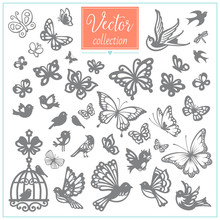 Butterflies And Birds. Big Vector Collection