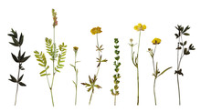 Dry Pressed Wild Flowers And P...
