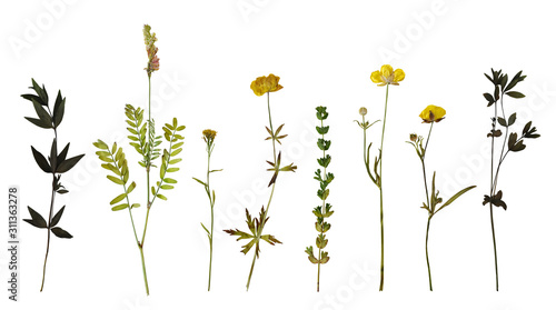 Stampa su Tela Dry pressed wild flowers and plants isolated on white background