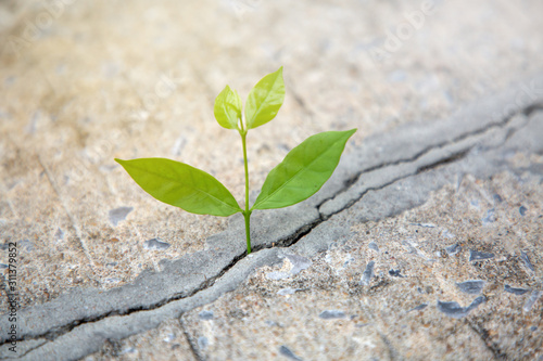 Fotografie, Tablou Young plant growing in cracked concrete road