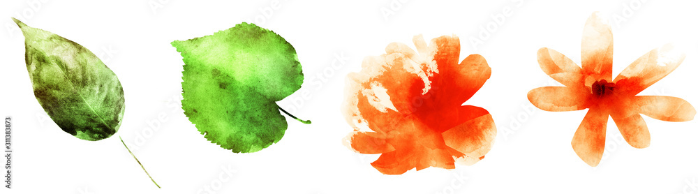 Four watercolor flowers and leafs on white. Set