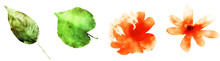 Four Watercolor Flowers And Le...
