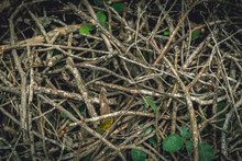 Dried Branches Background