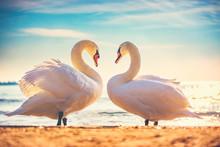 Sea Sunrise Swans Couple In Lo...