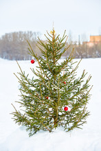 Live Natural Christmas Tree Decorated With Balls Stands On A Snow-covered Field.