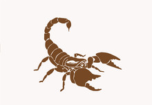 Graphical Vintage  Scorpion , ...