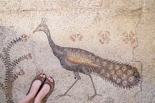 Tabgha, Israel. The Church Of The Multiplication Of The Loaves And Fish. Floor Mosaic, Details. Feet Selfie