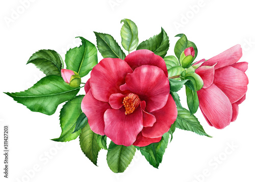 bouquet of camellia flowers on an isolated white background, watercolor illustra Canvas Print