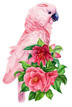 Composition With Pink Parrot A...