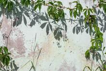 Green Vine Leaves Casting Shad...