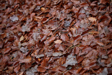 Dead Brown Leafs Macro Background High Quality Prints Winter Season Fifty Megapixels