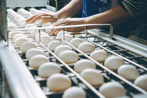 Photo egg factory plant agriculture poultry chicken farm