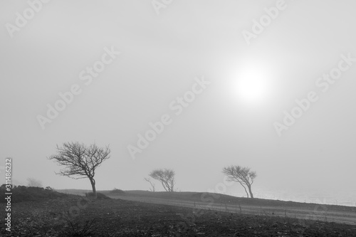 Fotografering Windblown trees in the mist by a gravel road