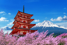 Cherry Blossoms In Spring, Chureito Pagoda And Fuji Mountain In Japan.