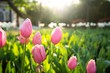 Pink tulip flowers in spring