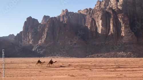 Vászonkép  Chameliers dans le Wadi Rum